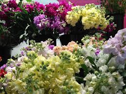 flower companies flower companies rpisite