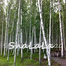 compare prices on russian trees shopping buy low price