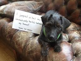 Dog Shaming Meme - dog shaming hilarious dog shaming pictures cbs news