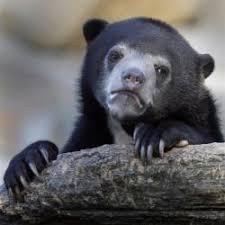Confession Bear Meme Generator - confession bear meme generator