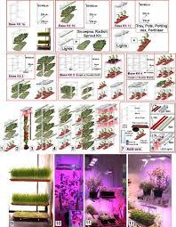 indoor vegetable gardening sprouting an indoor vegetable garden in