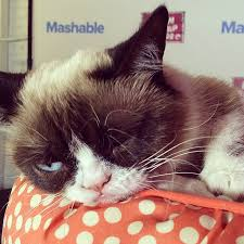 Cat Memes Generator - grumpy cat meme generator popsugar tech