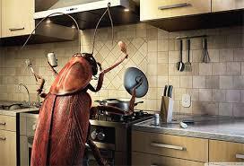 cafards cuisine ce qu ils sont le plus peur des cafards