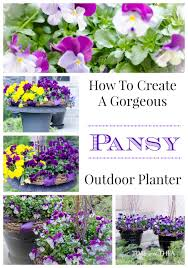 How To Create An Outdoor by How To Create A Gorgeous Pansy Outdoor Planter Time With Thea