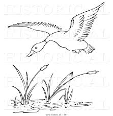 historical vector illustration of a duck flying over a pond with