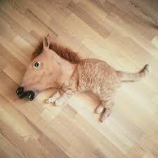 Horse Head Meme - the most weird wonderful and hilarious uses of the horse mask