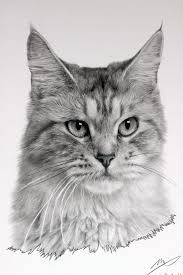 Drawing by 25 Best Drawings Of Cats Ideas On Pinterest How To Draw Cats
