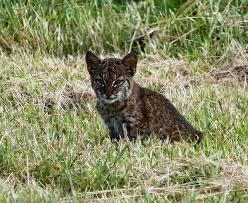North Carolina wildlife images 17 amazing wildlife photos captured in north carolina jpg