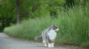 Barn Cat Names 25 Names For Southern Cats Southern Living