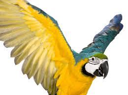 Bird Wing - bird wing clipping information