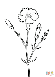 crimson carnation coloring page free printable coloring pages