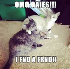 Stupid Cat Meme - grumble grumble another stupid cat meme grumble grumble meme