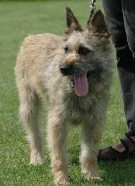 ergebnis für http www ergebnis für http www dogs info net uploads allimg 111026