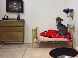 chihuahua has his very own bedroom under woman u0027s stairs with bed