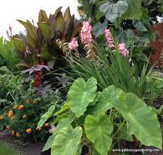 tropical garden borders garden pinterest gardens minnesota