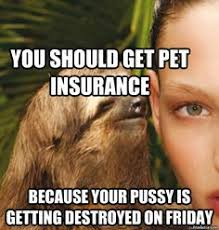 Best Sloth Memes - funny sloth memes you should get pet insurance photos wall4k