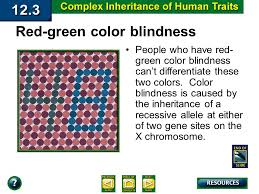 Human Color Blindness Week 4 Prevalent Human Genetic Disorders Biology Ppt Download