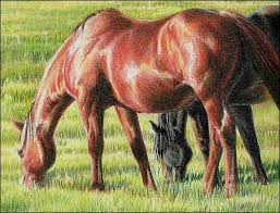55 best drawing how to draw horses images on pinterest colored