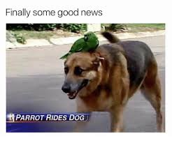 Good News Meme - finally some good news parrot rides dog dog meme on me me
