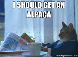 Alpaca Meme - nice 25 alpaca meme generator wallpaper site wallpaper site