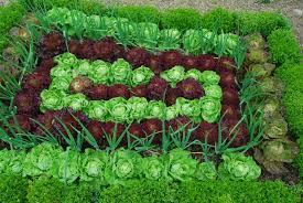 list of winter vegetables to grow growing vegetable garden urdu