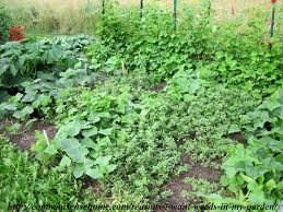 put your weeds to work 5 reasons i want weeds in my garden