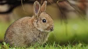 bunny rabbit trendy meat abc