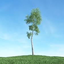 thin leaf tree 3d cgtrader