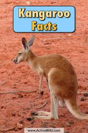 846 best wildlife images on pinterest wildlife animals and abc