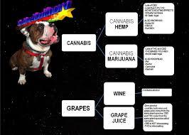 purcbd phytocannabinoid oil for pets