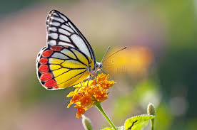 butterfly flower butterfly on a flower stock image image of pattern flower 23417093