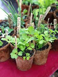garden planting guide when to plant seeds and seedlings for your