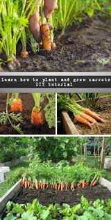 easy container vegetable gardening in 7 simple steps part 2