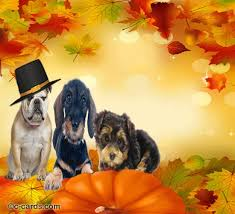 20 best thanksgiving images on ecards happy