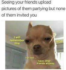 Chihuahua Meme - 19 chihuahua memes that are weirdly relatable