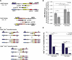 template switching during break induced replication is promoted by