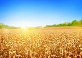 export of agricultural goods in 2016 has amounted to usd 5 7