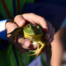 free images play boy kid jump summer child toad amphibian