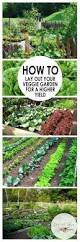 how to lay out your veggie garden for a higher yield vegetable