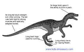 velociraptors facts kids