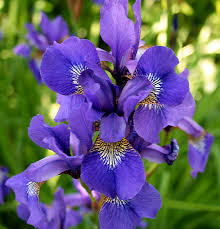 Poisonous Garden Flowers by Poisonous Plants To Watch Out For In The Garden The Perfect Diy