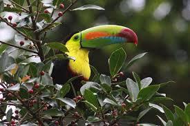 birds in hymns s birdwatching adventures plus