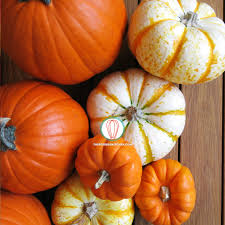 pumpkin phone wallpaper foodies freebie november 2016 wallpaper collection