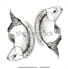 fish skeleton stock images royalty free images u0026 vectors