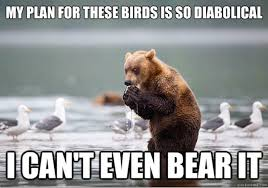 Bear Stuff Meme - most funny animal memes and humor pics funny animal memes and humor