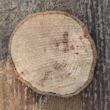 how to cut wooden disc wood slices hometalk