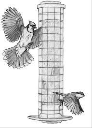 tell us about bird behavior at your feeder feederwatch