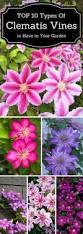 best 25 climbing flowering vines ideas on pinterest flower