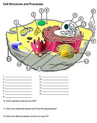 cell structure worksheet answers free worksheets library