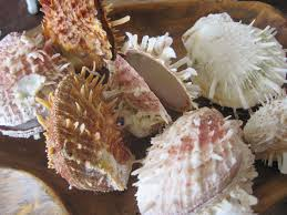 Seashell Home Decor Pale White Brown Spiky Spiny Oyster Shells 2 Shells